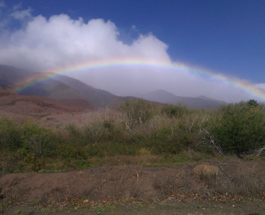 rainbow on ground