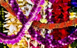 Tor Johnson Hawaii Tourism authority